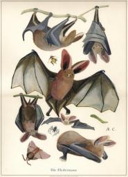 Fledermaus Poster Handsigniert- A3