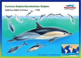 Gewöhnlicher Delphin - Postkarte