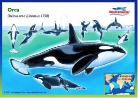 Orca - Postkarte