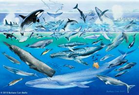 Das Whalefinder®-Poster als Postkarte